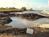 Everglades y Cemex