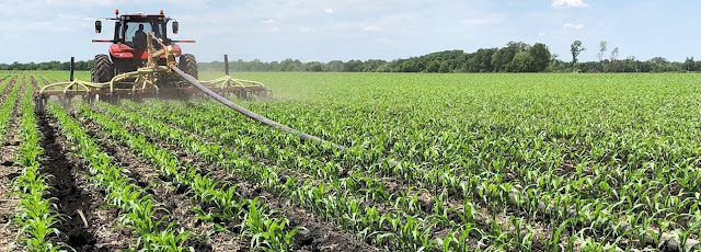 Sidedress swine manure corn