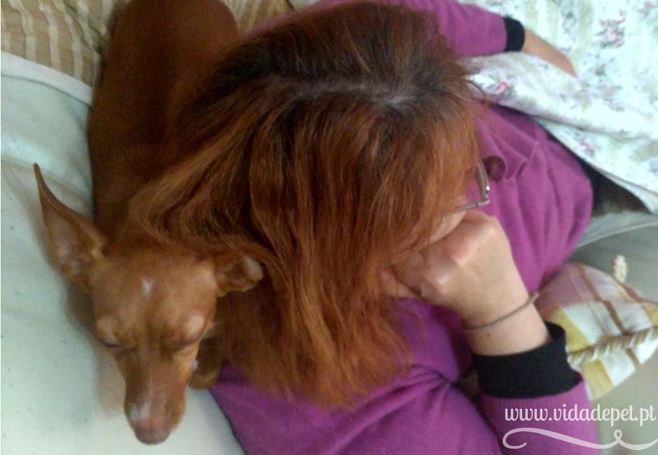 A cadela cachecol + blogue português de casal + português + Portugal + vida de pet + pedro e telma + chiclet + cão mimado + a cadela mais mimada do mundo