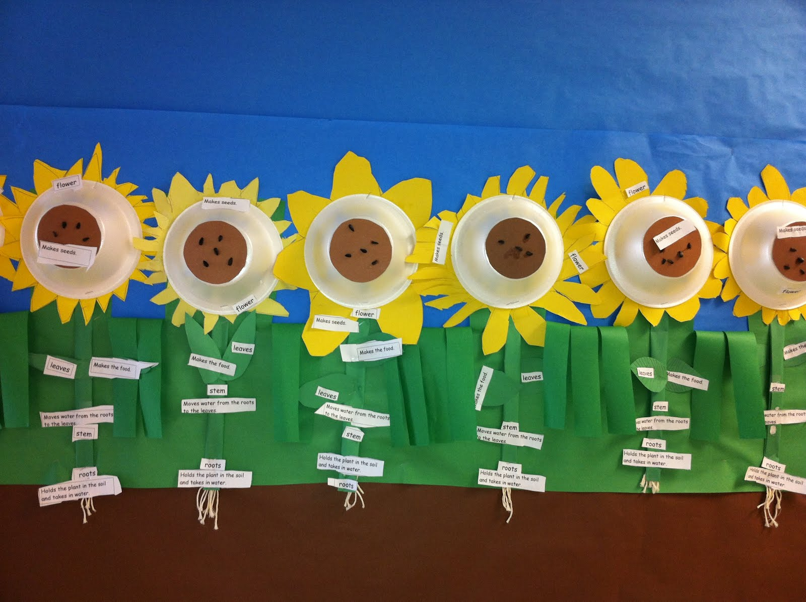 hight resolution of sunny sunflowers parts of plants diagram