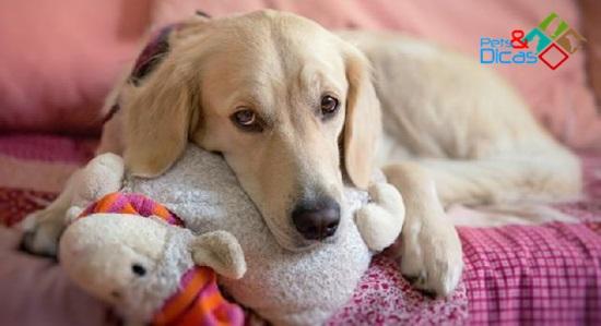 Cadela adota ursinhos de pelúcia