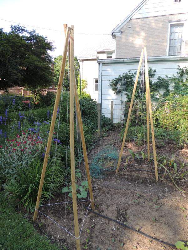 Penn State Extension Philadelphia Master Gardeners Great