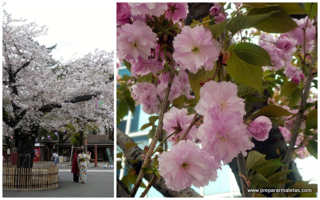 temporada de sakura en japon