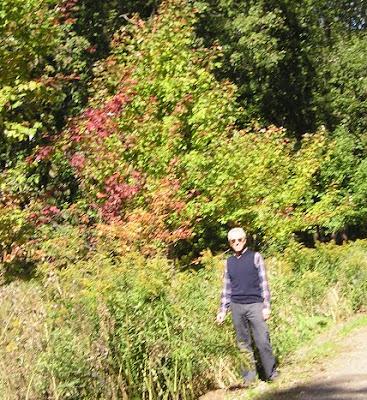 trees; silver maples; reforestation; ecology; Canada; Giorgio Coniglio