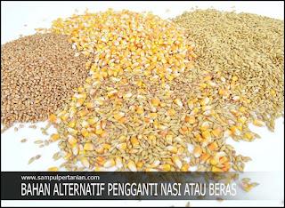 7 Bahan makanan alternatif pengganti Beras atau Nasi sebagai makanan pokok