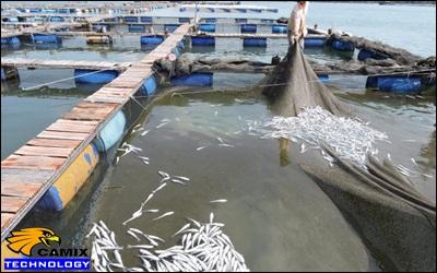 Công ty tư vấn xử lý nước thải chế biến thủy hải sản - Kiên Giang chưa thể kiểm soát nguồn ô nhiễm biển