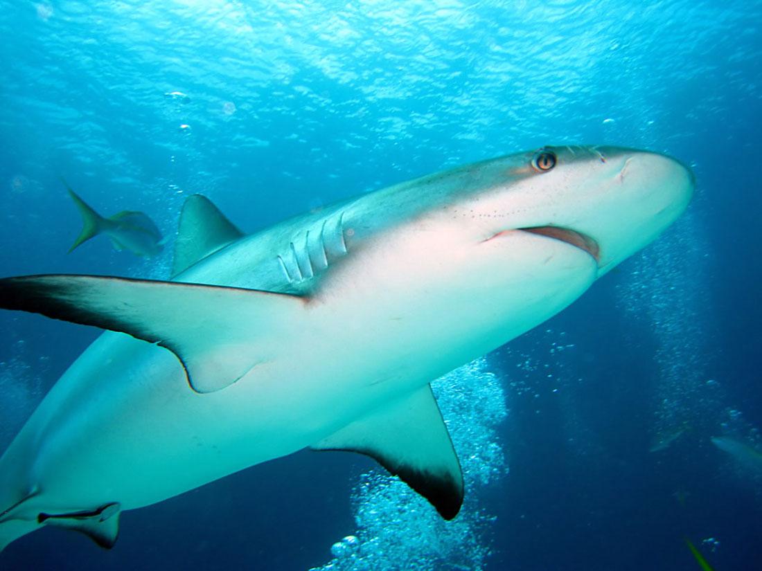 Mar Do Ceará Raias E Tubarões Primos Bem Próximos