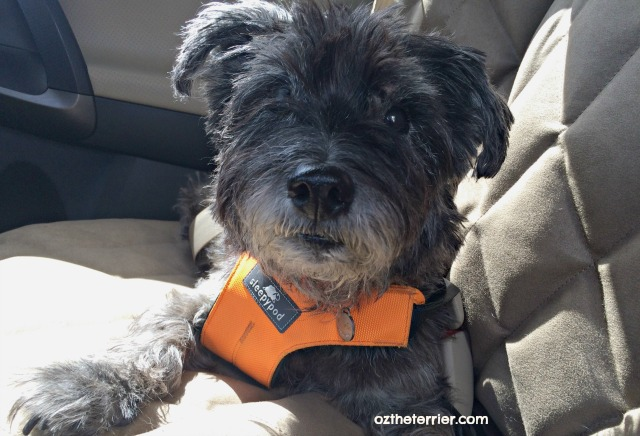 oz why dogs love car rides