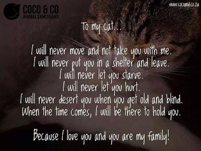 cat quotes to my cat.