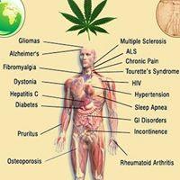 https://www.petitieonline.com/canabis_in_scop_medicinal_in_romania