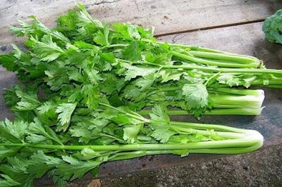 Kandungan Nutrisi, Vitamin, dan Senyawa dalam Seledri
