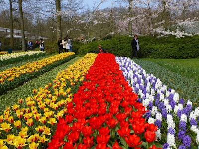 Tulip Garden Amsterdam