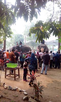 Percutian Keluarga Di Pusat Pemulihan Gajah,  Lanchang,  Pahang Yang Perlu Anda Lawati