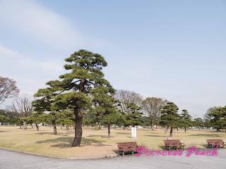 日本: 櫻花漫舞東京親子遊 – 江戶城墻配小船之千鳥之淵~!!! (Tokyo, Japan)