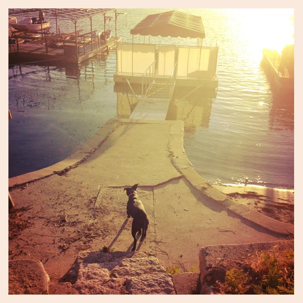 lake arrowhead, dog, docks, sunset
