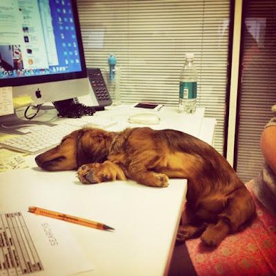 Perro dormido en el trabajo
