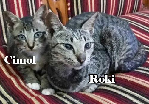 KENANGAN : ROKI dan anak yang masih hidup CIMOL sempat saya foto di suaru hari di tahun 2016. Foto Asep Haryono