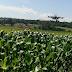 Cotonicultores apostam na agricultura 4.0 para garantir a sustentabilidade da cultura