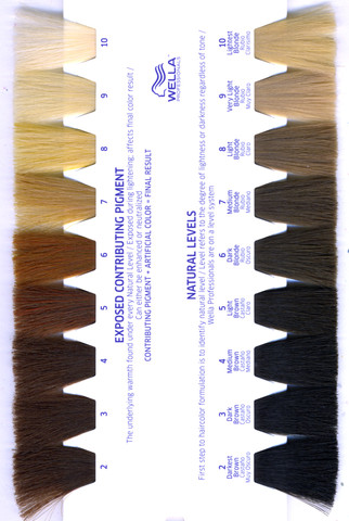 Become A Crib Colorist Learn The Level System Of Hair ...