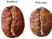 Mengenal Perbedaan Kopi Robusta dan Kopi Arabika