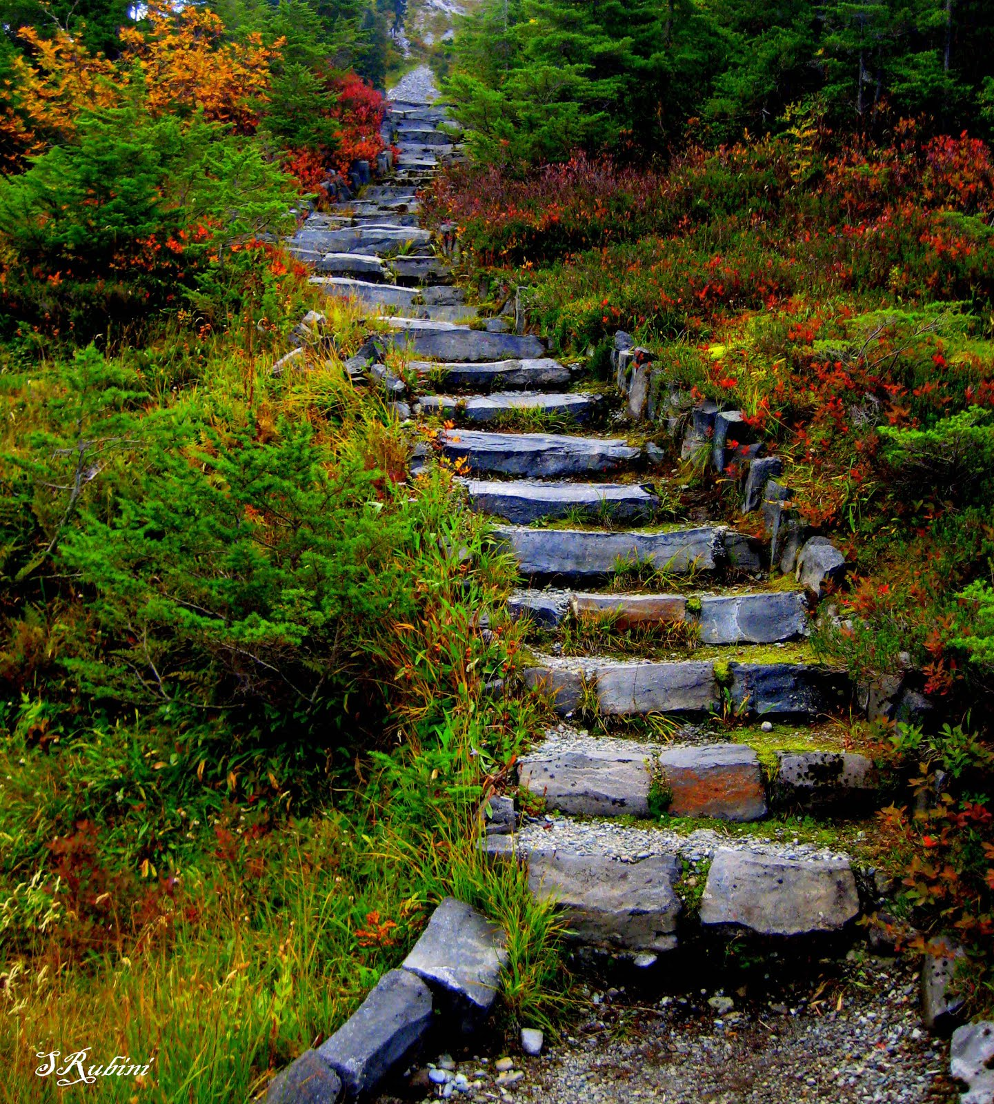 heather meadows staircase