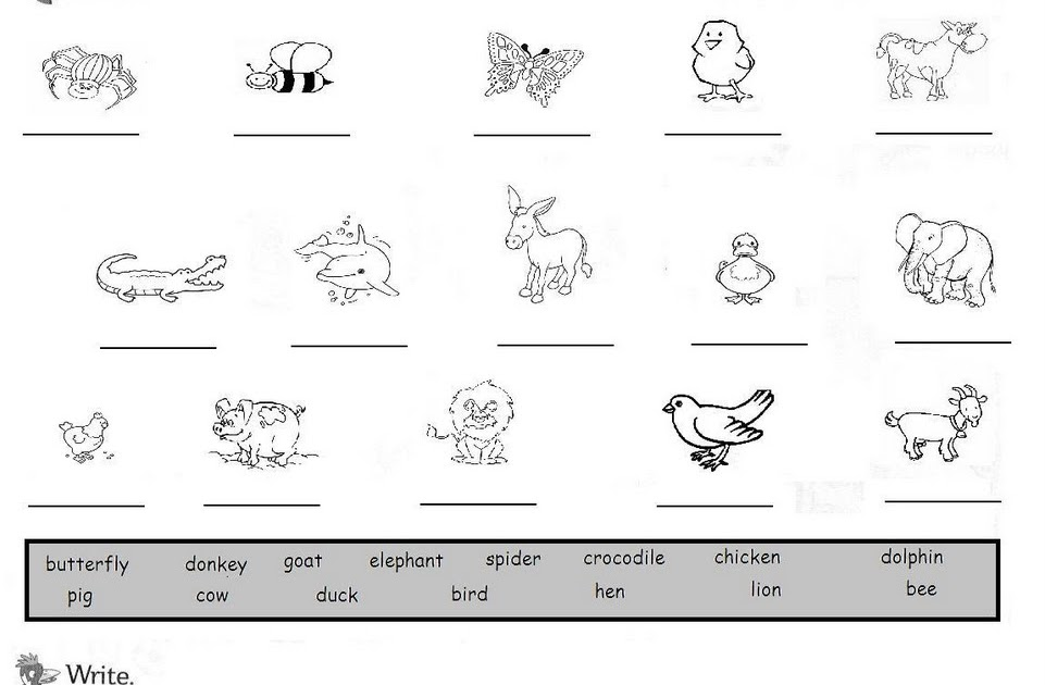 Mi Cuadernillo De Inglés Crucigrama De Animales