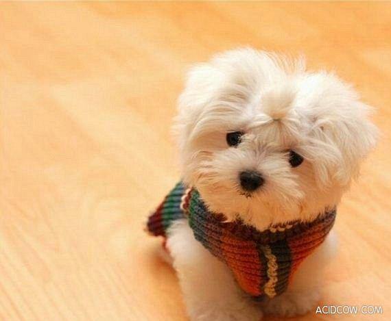 fotos de perritos - photo #24