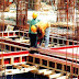 What is Formwork, Shuttering, Scaffolding, Shouring