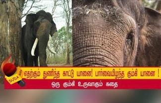 Chasing between kumki and wild elephant