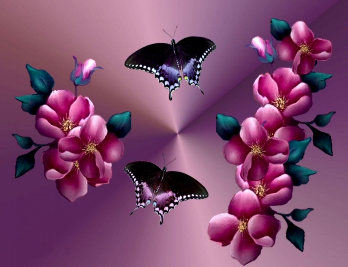 Butterfly Flower Wallpapers Safari Wallpapers