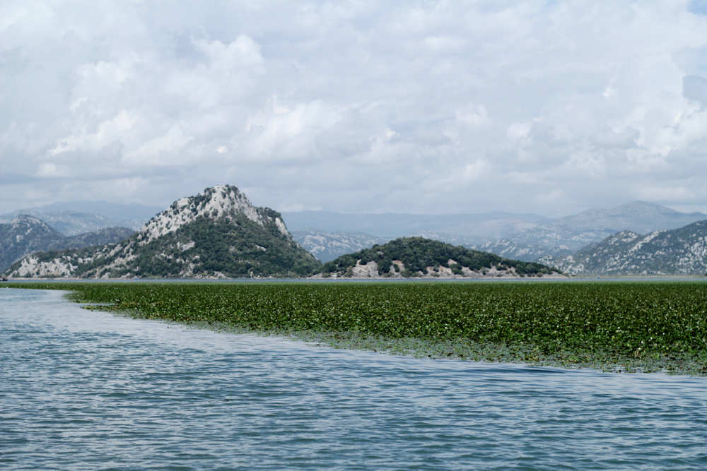 BLOG-MODE-HOMME-VOYAGE-Lifestyle-montenegro-skadar-lake-lac-golden-frog-cruise-croisiere-chataigne-d-eau-nationl-park-icredible-landcape-nature