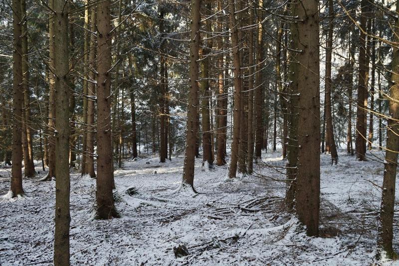 Winterwald Spaziergang Schnee Natur Dezember Winter
