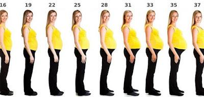 '' الحمل '' ومراحل تطوره ..تعرف عليها -ليالينا
