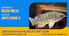 Essen Ikan Nila Paling Jitu Anti Zonk