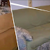 """Roommates Bought An Old Sofa For $20, Finds Something """"More"""" After Checking It At Home"""