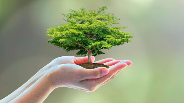 Usar productos ecofriendly ya es una 'necesidad'