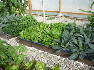Helpful Ideas and Tips of Organic Gardening