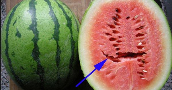 Pernah Lihat Semangka yang Berongga Seperti Ini? Sebaiknya Jangan Dimakan, Itu Bisa Membuat Anda Sakit. Yuk Baca Dan Bagikan