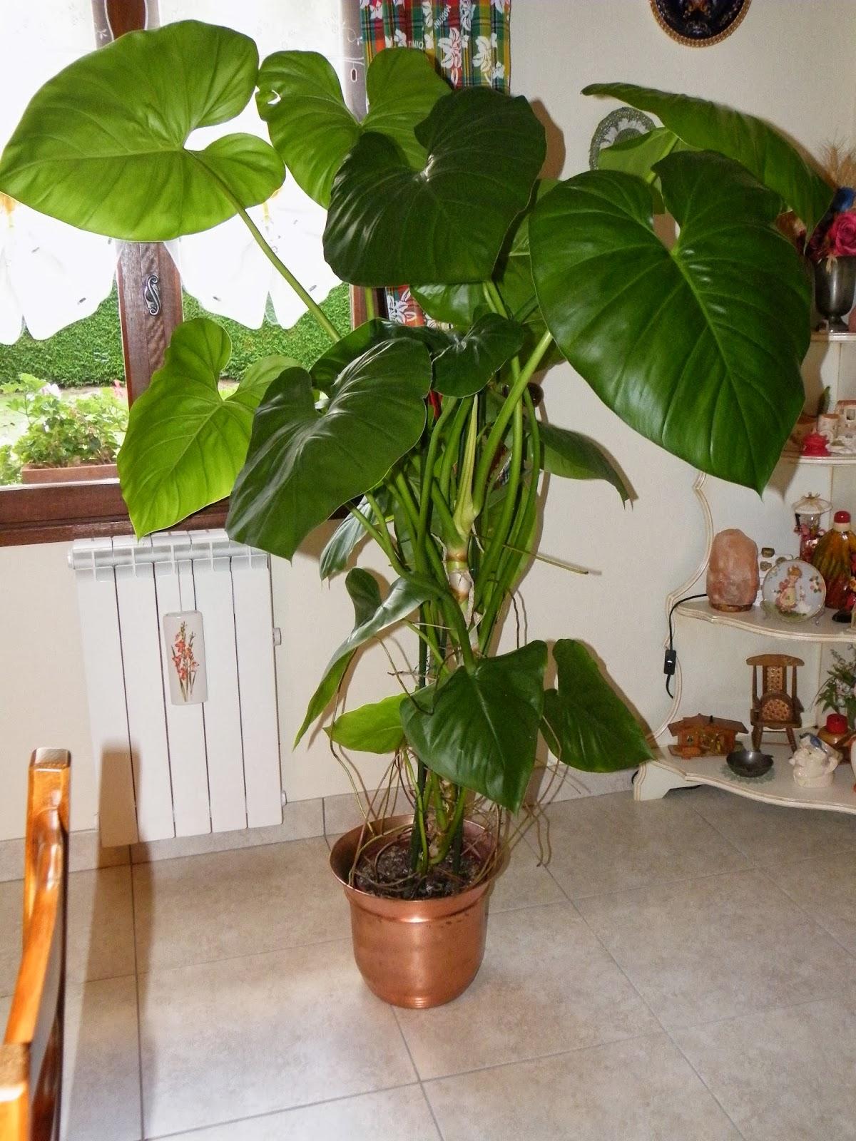 du four au jardin et mes dix doigts plante verte. Black Bedroom Furniture Sets. Home Design Ideas