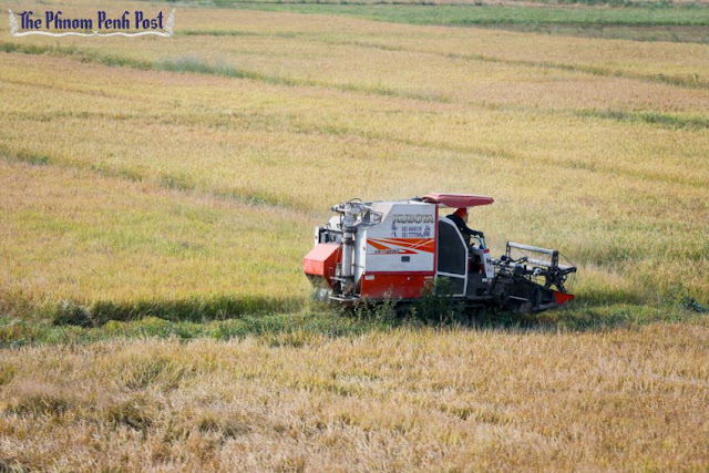 Rice is harvested from a field using a small harvest machine in Tbong Khmum province earlier this year. Heng Chivoan