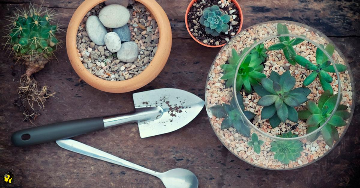 Aprenda como cultivar suculentas