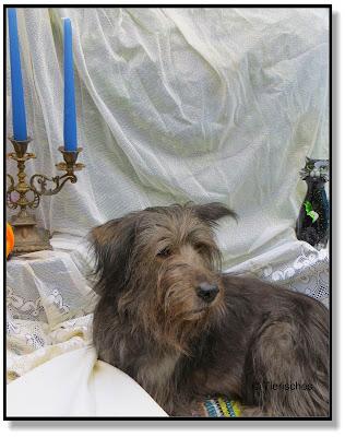 Hund vor Halloween-Dekoration