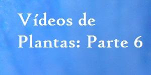 Vídeos de plantas parte 6