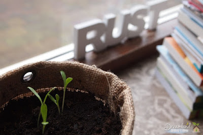 Container Gardening: When You Have No Space