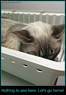 Milita hunkers down in her carrier in the exam room at the vet.