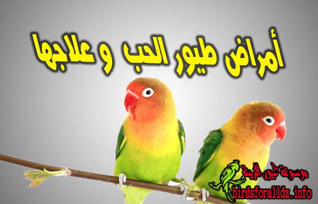 أمراض طيور الحب وسبل علاجها