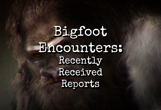 Bigfoot Encounters: Recently Received Reports