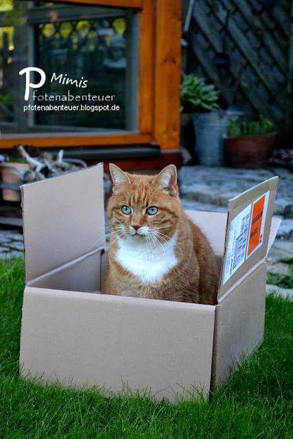 Mimi sitzt in einem Karton