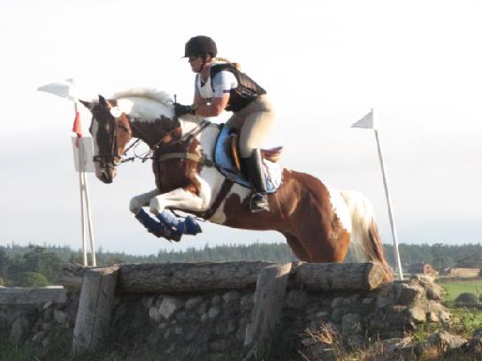 Arabian Horses Best Winner Showingjumping Competition Tip ...