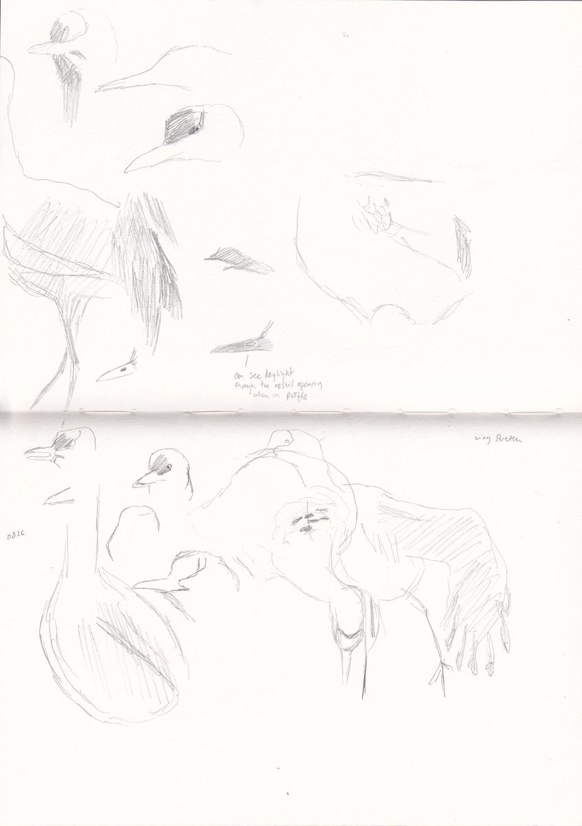 Sketches from the field: October 2011